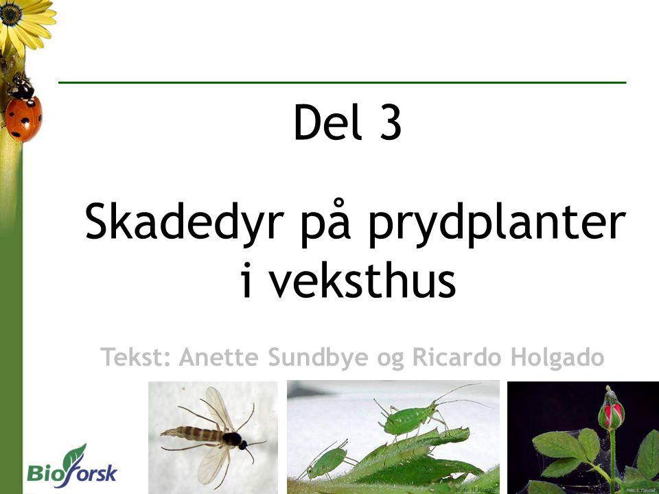 Del 3 Skadedyr på prydplanter i veksthus Tekst: Anette Sundbye og Ricardo Holgado