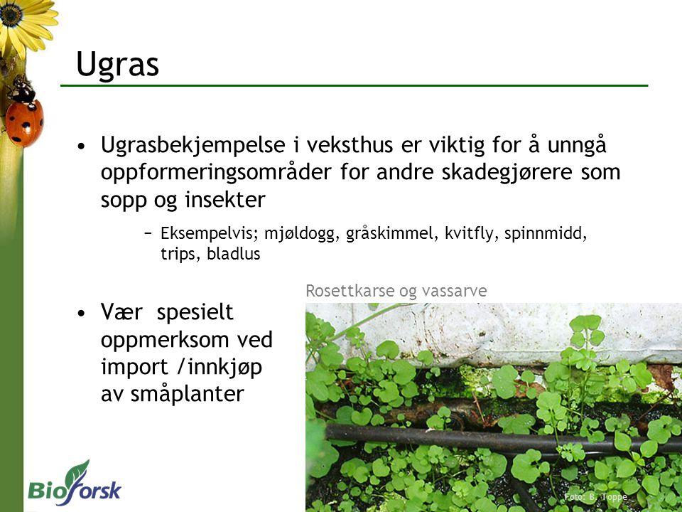 Ugras Ugrasbekjempelse i veksthus er viktig for å unngå oppformeringsområder for andre skadegjørere som sopp og insekter −Eksempelvis; mjøldogg, gråsk