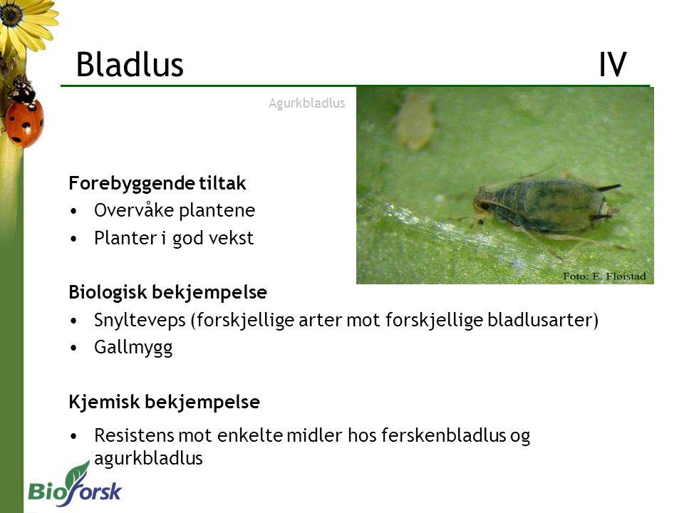 Forebyggende tiltak Overvåke plantene Planter i god vekst Biologisk bekjempelse Snylteveps (forskjellige arter mot forskjellige bladlusarter) Gallmygg