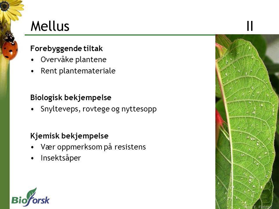 Forebyggende tiltak Overvåke plantene Rent plantemateriale Biologisk bekjempelse Snylteveps, rovtege og nyttesopp Kjemisk bekjempelse Vær oppmerksom p