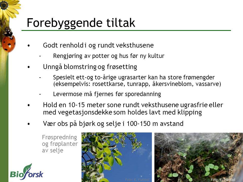 Forebyggende tiltak Overvåke plantene Rent plantemateriale Biologisk bekjempelse Snylteveps, rovtege og nyttesopp Kjemisk bekjempelse Vær oppmerksom på resistens Insektsåper Mellus II Foto: E.
