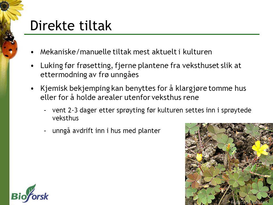 Direkte tiltak Mekaniske/manuelle tiltak mest aktuelt i kulturen Luking før frøsetting, fjerne plantene fra veksthuset slik at ettermodning av frø unn