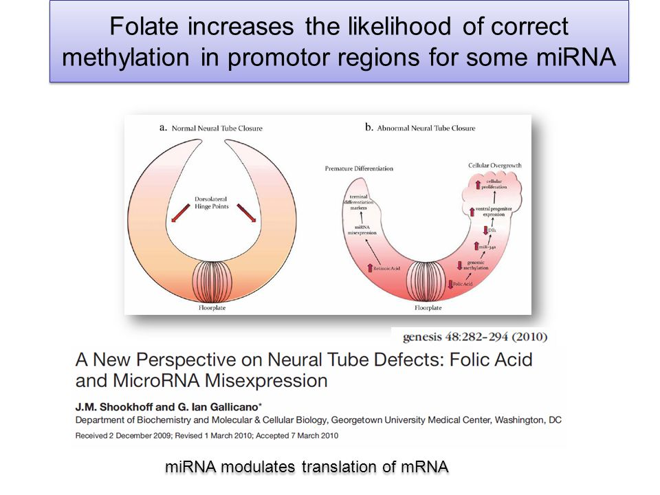 Folate increases the likelihood of correct methylation in promotor regions for some miRNA miRNA modulates translation of mRNA
