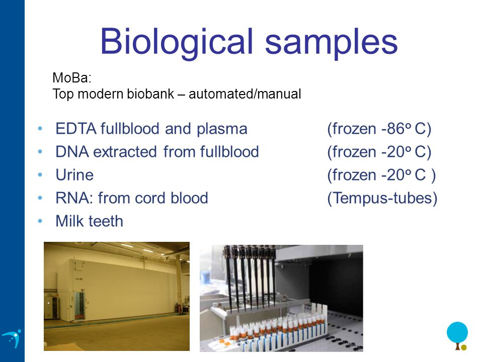 Biological samples MoBa: Top modern biobank – automated/manual •EDTA fullblood and plasma (frozen -86 o C) •DNA extracted from fullblood (frozen -20 o C) •Urine(frozen -20 o C ) •RNA: from cord blood (Tempus-tubes) •Milk teeth